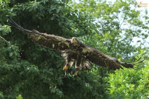 bird-of-prey-188832_640